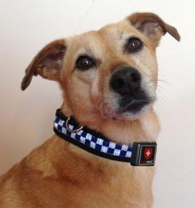 Hund mit GPS Tracker