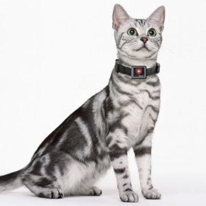 Katze mit Swisstrack GPS Tracker